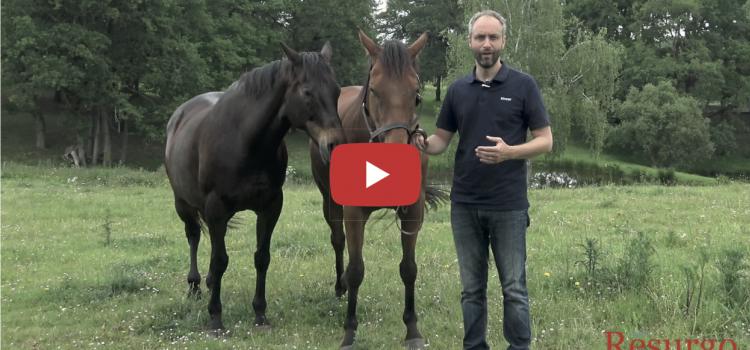 Un cheval peut-il nous apprendre le management ?