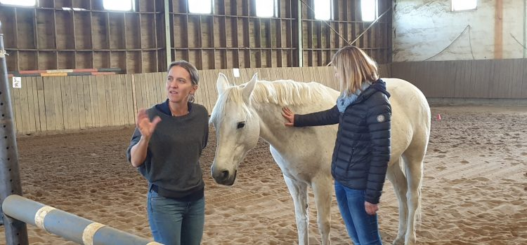 Le horse coaching, un coaching fort en émotions